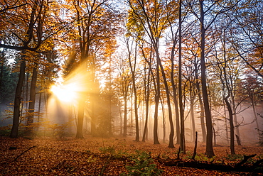 Golden rays cutting through a misty forest, Heidelberg area, Baden-Wurttemberg, Germany, Europe