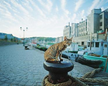 Cat Sitting on Port Rope Holder