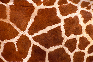 Reticulated giraffe print