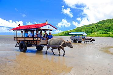 Buffalo Cart, Okinawa