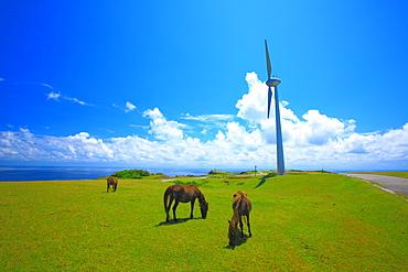 Horses, Okinawa
