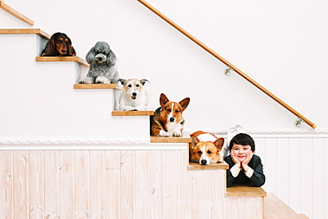 Boy and dogs lying on the stairs