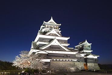 Night View Of Cherry Blossoms , Kumamoto Castle, Kyushu, Japan