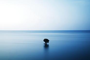 Iriomote, Okinawa, Japan