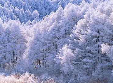 Hijiri Highland, Nagano, Japan
