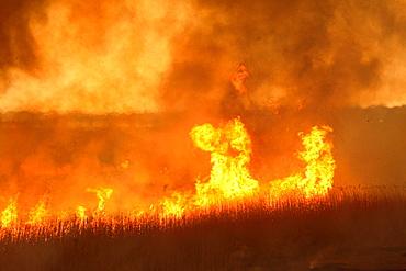 Watarase Controlled Burn, Tochigi, Japan