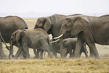 Amboseli National Park, Kenya