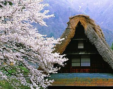 Suganuma, Gokayama Village, Toyama Prefecture, Japan