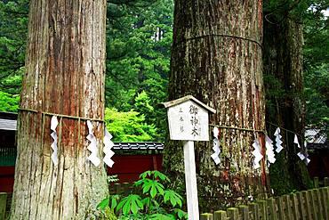 Nikko Futarasan Shrine, Tochigi, Japan