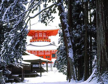 Konpondaitou, Koyasan, Wakayama, Japan