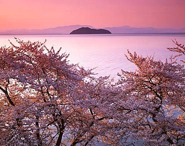 Kaizu Osaki, Shiga Prefecture