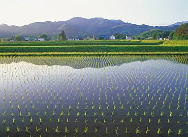 Atsushiokano Forest, Fukushima Prefecture
