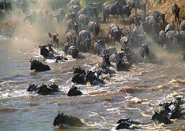 Gnu Group, Kenya