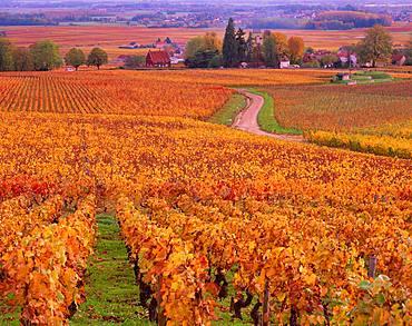 Burgundy, France