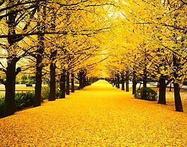 Tokyo Showa Kinen Park,