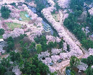 Hirosaki Park Cherry Tree, Aomori Prefecture