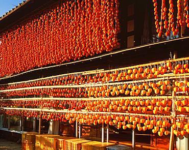 Dried Persimmon, Yamanashi Prefecture