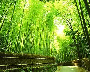 Sagano, Kyoto