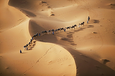 The setting sun over the desert makes a enchanting shadow as a caravan of camel merchants winds their way toward the next stop on their journey, Sahara Desert
