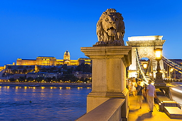 The Chain Bridge with the lion statue by dusk with a view of Buda Castle, Budapest, Hungary