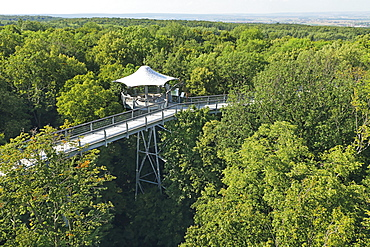 The treetop walkway in the Hainich National Park, Thuringia, Germany