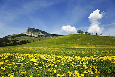 View of landscape with flowers on meadow at Entlebuch, Lucerne, Switzerland