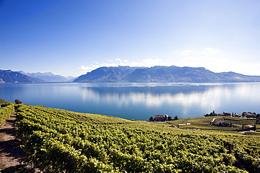 View of mount Alps and vineyards, Lake Geneva, Lavaux, Switzerland
