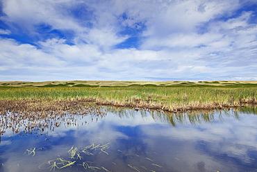 View of marshy land, Prince Edward Island, Greenwich, Canada