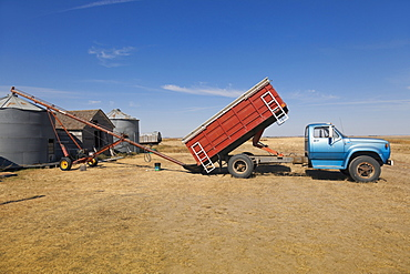 View of truck discharging wheat in ranch on highway 6 South, Saskatchewan, Canada