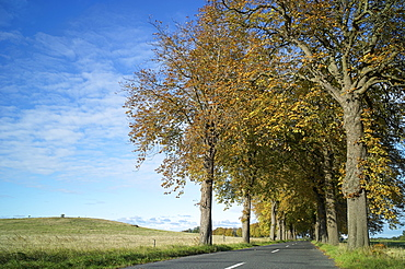 An avenue between Quilitz and Liepe on Usedom