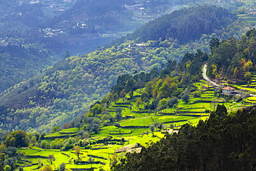 Terraced fields, Peneda Geres National Park, the only national park in Portugal, Norte Region, Portugal, Europe