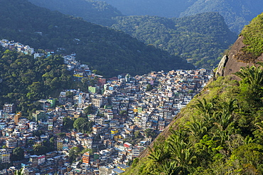 View of Rocinha favela and the forest of Tijuca National Park, Rio de Janeiro, Brazil, South America