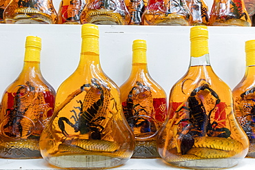 Scorpion and snake brandy for sale in Vietnam, Hanoi, Vietnam, Indochina, Southeast Asia, Asia