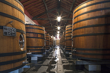 Wine barrels storing award-winning Portuguese wine in the cellars of the Reynolds vineyard and winery near Arronches, Alentejo, Portugal, Europe