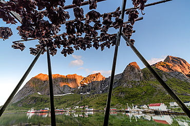 Midnight sun on dried fish framed by fishing village and peaks, Reine, Nordland county, Lofoten Islands, Arctic, Northern Norway, Scandinavia, Europe