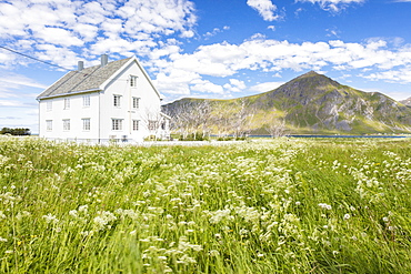 Field of blooming flowers frame the typical wooden house surrounded by peaks and blue sea, Flakstad, Lofoten Islands, Norway, Scandinavia, Europe