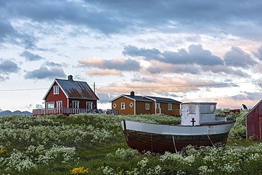 Midnight sun on the wooden houses called rorbu surrounded by blooming flowers, Eggum, Vestvagoy, Lofoten Islands, Norway, Scandinavia, Europe