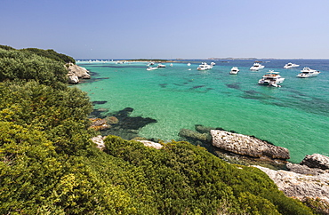 Green vegetation of the inland frames the speed boats moored in the crystal sea, Sperone, Bonifacio, South Corsica, France, Mediterranean, Europe