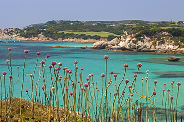 Pink flowers of the inland frame the turquoise sea in summer, Sperone, Bonifacio, South Corsica, France, Mediterranean, Europe