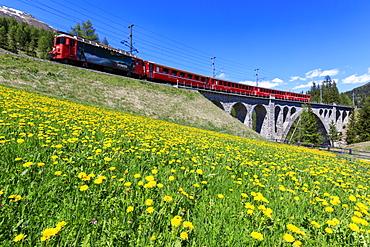 Bernina Express train on Cinuos-chel Viadukt in spring, St. Moritz, Majola, Canton of Graubunden, Switzerland, Europe