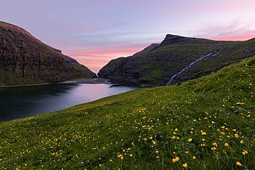 Wild flowers around the sea water lagoon Saksun, Streymoy Island, Faroe Islands, Denmark, Europe