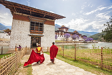 Two monks dressed in traditional red access the Punakha Dzong a former monastery in the town of Punakha, Bhutan, Asia