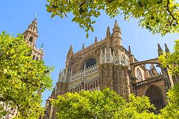 The gothic baroque Giralda belfry of Seville Cathedral seen from Patio De Los Naranjos, UNESCO World Heritage Site, Seville, Andalusia, Spain, Europe