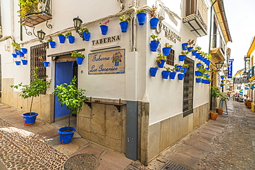 Hanging flowerpots on walls of typical tavern in the old alley of Calleja De Las Flores, Cordoba, Andalusia, Spain, Europe