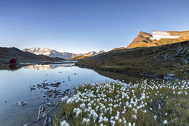 Blooming of eriofori (cotton grass) on Levanne mountains, Gran Paradiso National Park, Alpi Graie (Graian Alps) Italy, Europe