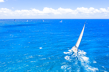 Sailing boats in the blue sea during a competition, Antigua, Leeward Islands, West Indies, Caribbean, Central America