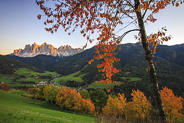 Colorful autumn trees frame the group of Odle and the village of St. Magdalena, Funes Valley, South Tyrol, Dolomites, Italy, Europe