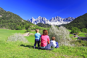 Family on green meadows admires the flowering trees at the foot of Odle, Funes Valley, South Tyrol, Dolomites, Italy, Europe