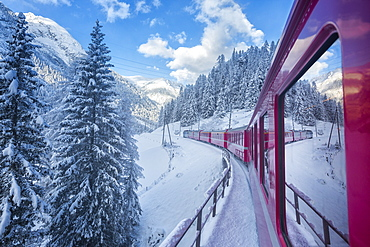 Bernina Express passes through the snowy woods, Filisur, Canton of Grisons (Graubunden), Switzerland, Europe