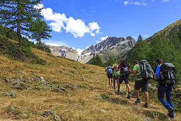 A group of hikers walking in the woods before reaching the peak, Minor Valley, High Valtellina, Livigno, Lombardy, Italy, Europe